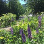 Rock River Cabin Rental